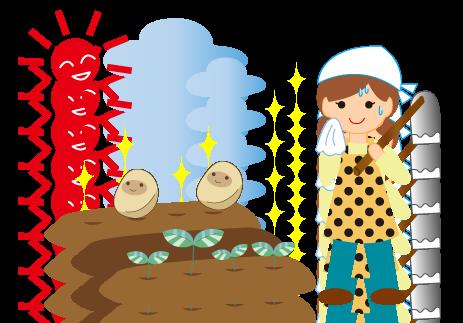 卵胞(たまご)の一生★仙臺薬局におまかせください